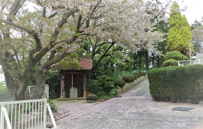津屋崎園 玄関 桜.jpg