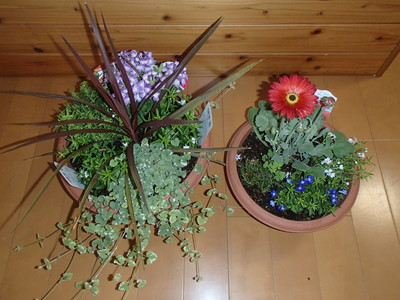 春 (2).JPG